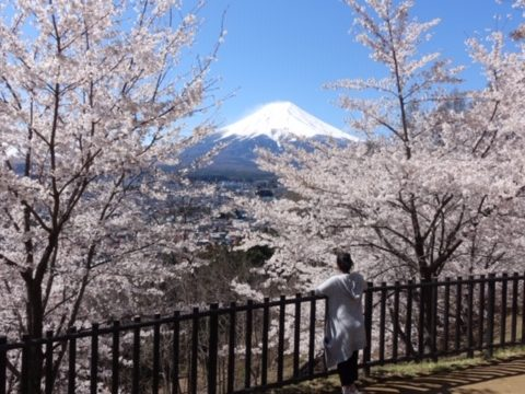 """Cherry Blossoms"" and ""Izakaya Pub"" in Nagano"
